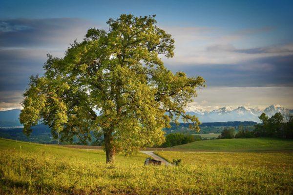 caldo blocca capacità degli alberi di assorbire carbonio